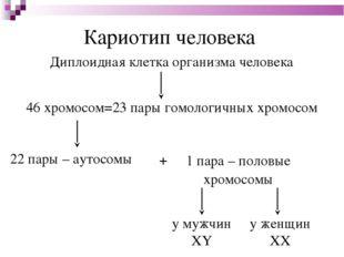 Кариотип человека Диплоидная клетка организма человека 46 хромосом=23 пары го