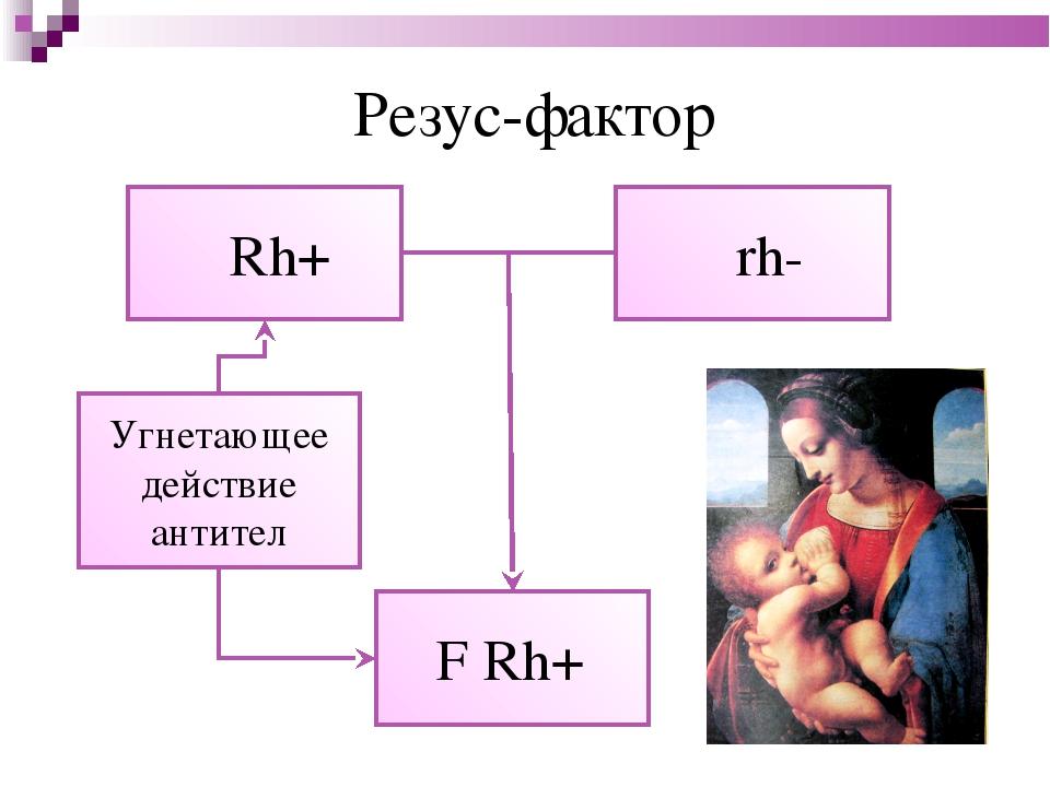 Резус-фактор ♂ Rh+ ♀rh- F Rh+ Угнетающее действие антител
