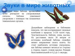 Некоторые виды бабочек чрезвычайно чутко реагируют на ультразвуковые сигналы.