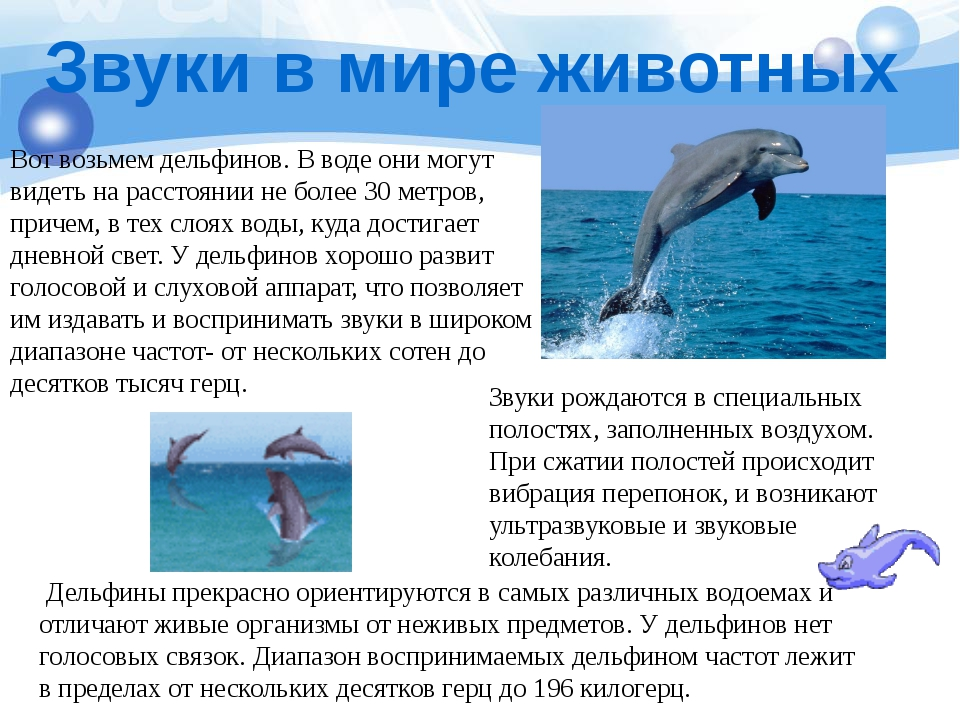 Звуки в мире животных Вот возьмем дельфинов. В воде они могут видеть на расст...
