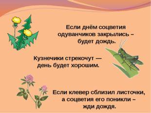 Если клевер сблизил листочки, а соцветия его поникли – жди дождя. Если днём с