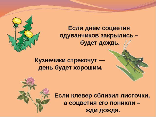 Если клевер сблизил листочки, а соцветия его поникли – жди дождя. Если днём с...