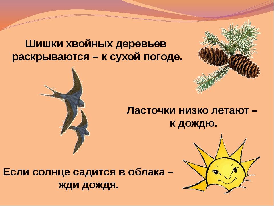 Шишки хвойных деревьев раскрываются – к сухой погоде. Если солнце садится в о...