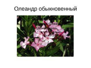 Олеандр обыкновенный
