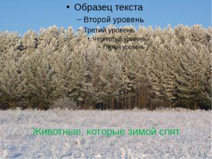 Животные, которые зимой спят.