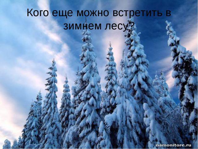 Кого еще можно встретить в зимнем лесу?