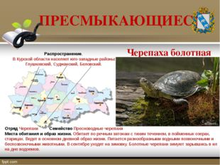 ПРЕСМЫКАЮЩИЕСЯ Отряд Черепахи Семейство Пресноводные черепахи Места обитания