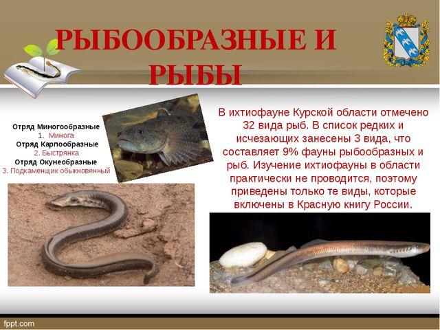 РЫБООБРАЗНЫЕ И РЫБЫ В ихтиофауне Курской области отмечено 32 вида рыб. В спис...