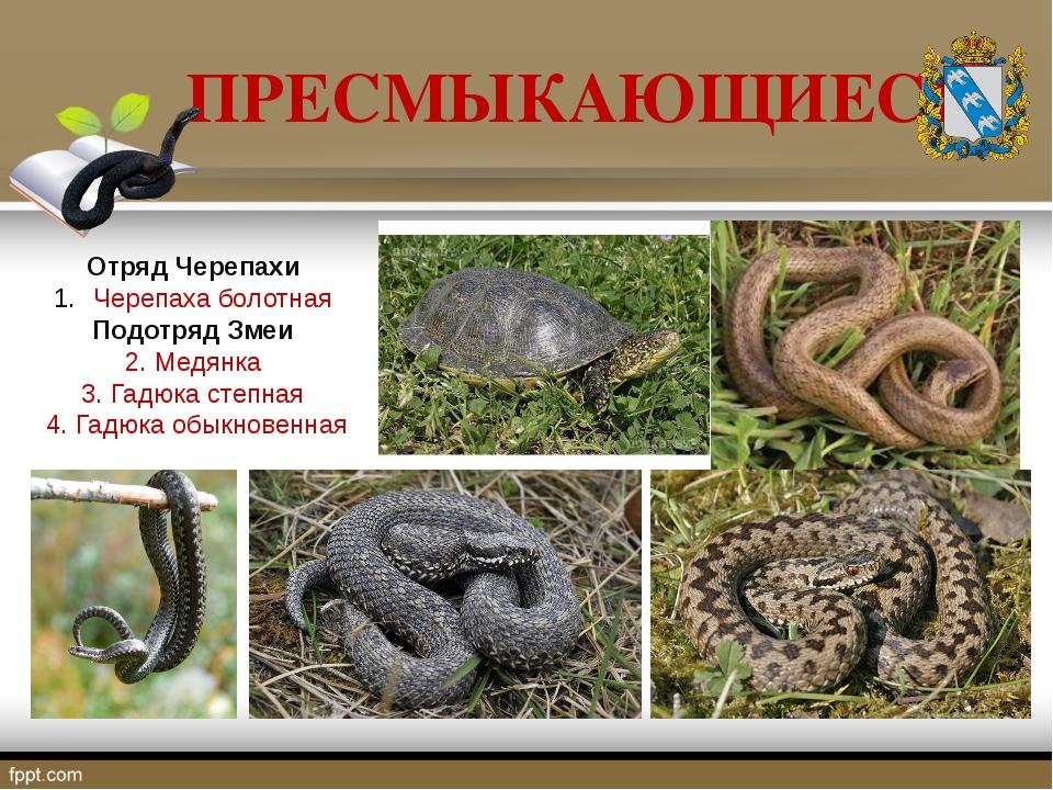 ПРЕСМЫКАЮЩИЕСЯ Отряд Черепахи Черепаха болотная Подотряд Змеи 2. Медянка 3. Г...