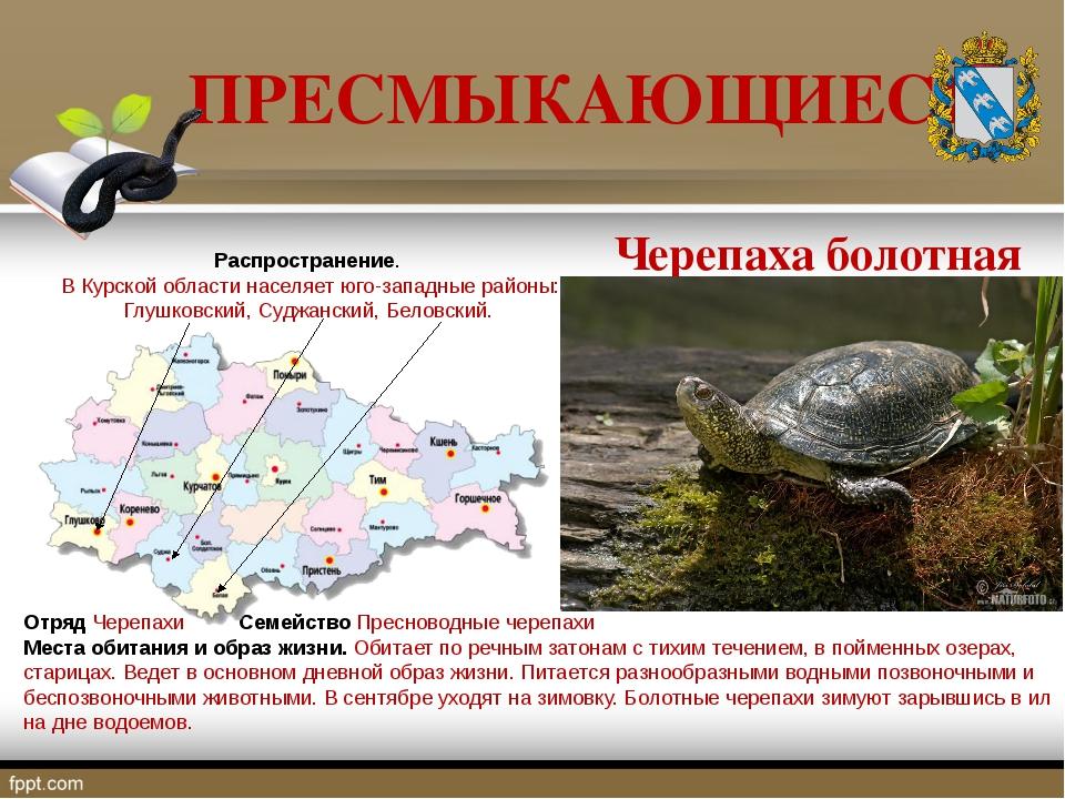 ПРЕСМЫКАЮЩИЕСЯ Отряд Черепахи Семейство Пресноводные черепахи Места обитания...