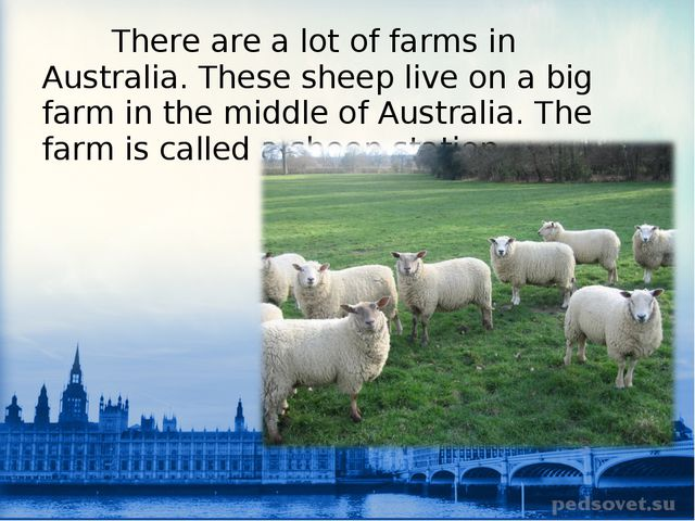 There are a lot of farms in Australia. These sheep live on a big farm in the...