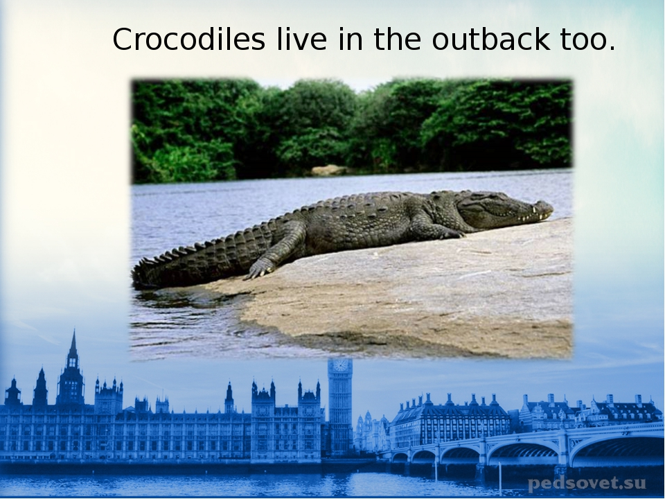 Crocodiles live in the outback too.