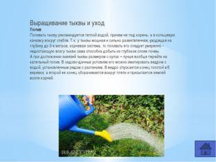 Самая большая тыква, выращенная в России Огромную тыкву вырастили Шабалины На