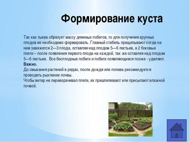 Консервно-овощесушильный комбинат Конвейер для переработки тыквы Переработка...