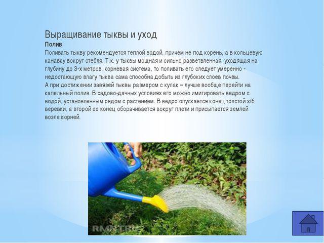 Самая большая тыква, выращенная в России Огромную тыкву вырастили Шабалины На...
