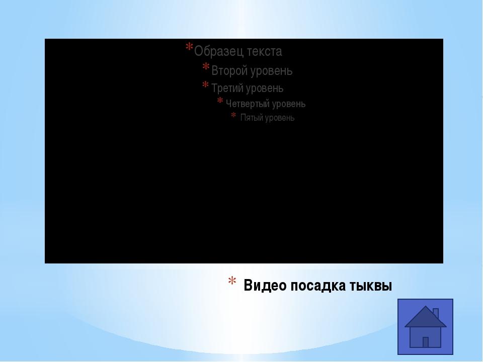 Золушка Приключения Чиполино Тыква в художественных произведениях (жанр сказки)