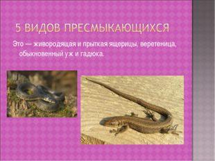 Это — живородящая и прыткая ящерицы, веретеница, обыкновенный уж и гадюка.