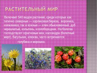 Включает 540 видов растений, среди которых как типично северные — карликовая