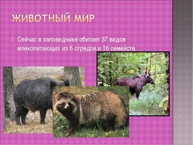 Сейчас в заповеднике обитает 37 видов млекопитающих из 6 отрядов и 16 семейств.