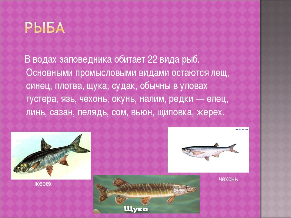 В водах заповедника обитает 22 вида рыб. Основными промысловыми видами остаю...