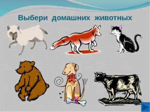 Выбери домашних животных