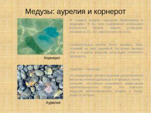 Медузы: аурелия и корнерот В старину медузы находили применение в медицине. В