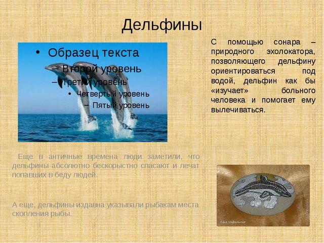 Дельфины Еще в античные времена люди заметили, что дельфины абсолютно бескоры...
