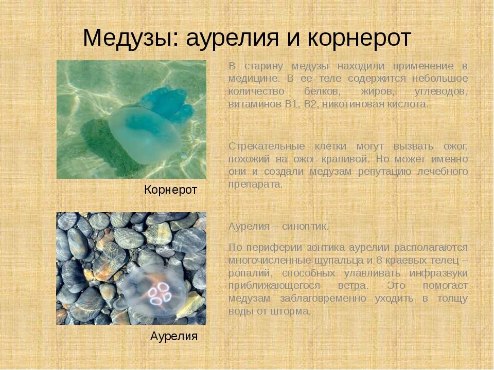 Медузы: аурелия и корнерот В старину медузы находили применение в медицине. В...
