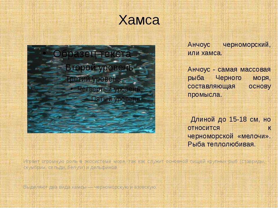 Хамса Играет огромную роль в экосистеме моря, так как служит основной пищей к...