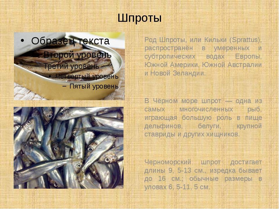 Шпроты Род Шпроты, или Кильки (Sprattus), распространён в умеренных и субтроп...
