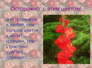 Осторожно с этим цветом! Это признание в любви, чем больше цветок « налит кро
