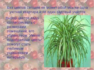 Без цветов сегодня не может обойтись ни одна уютная квартира и не один садовы