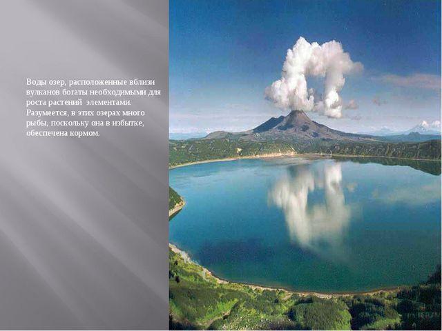 Воды озер, расположенные вблизи вулканов богаты необходимыми для роста растен...