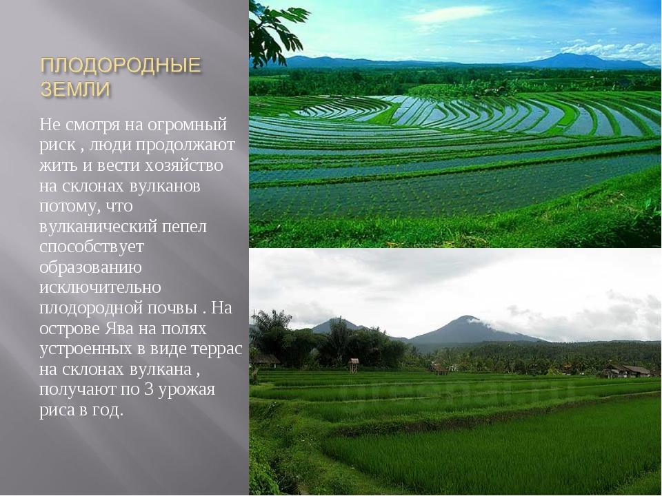 картинки про плодородие почвы возле вулканов так приготовил варенье