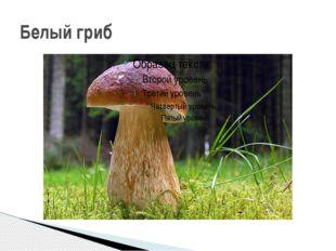 Задание 2. Посмотрите на свой рисунок гриба и вспомните все, что вы знаете о