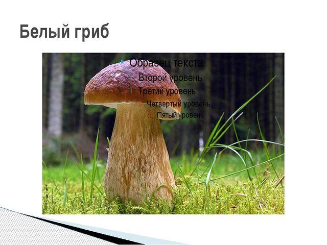 Задание 2. Посмотрите на свой рисунок гриба и вспомните все, что вы знаете о...