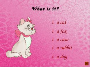 What is it? ◦a cat ◦a fox ◦a caw ◦a dog ◦a rabbit