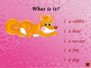 What is it? ◦a rabbit ◦a bear ◦a dog ◦a raccoon ◦a fox