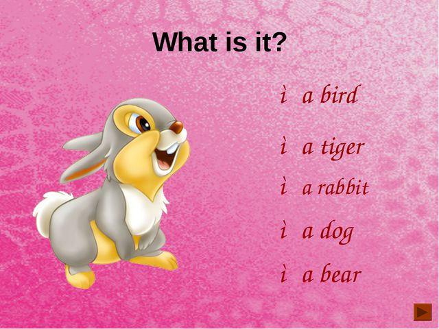 What is it? ◦a bird ◦a tiger ◦a bear ◦a rabbit ◦a dog
