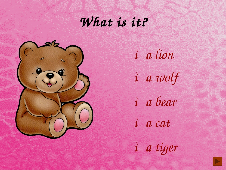 What is it? ◦a lion ◦a wolf ◦a tiger ◦a bear ◦a cat