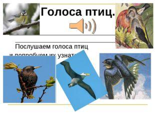 Голоса птиц. Послушаем голоса птиц и попробуем их узнать.