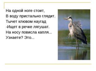 На одной ноге стоит, В воду пристально глядит. Тычет клювом наугад -Ищет в ре