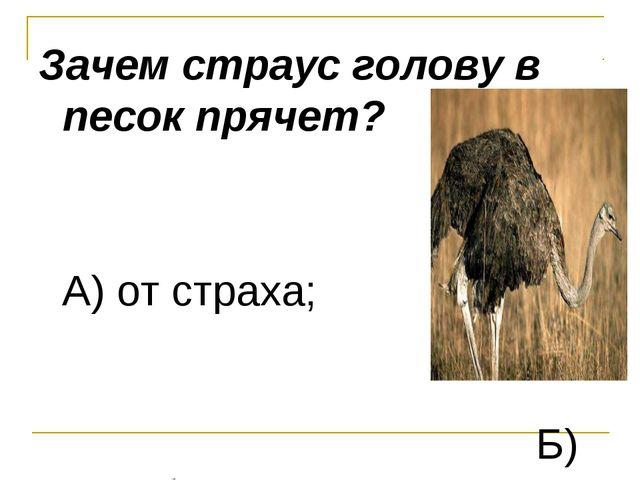 Зачем страус голову в песок прячет? А) от страха; Б) освобождается от паразит...