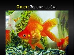 Ответ: Золотая рыбка