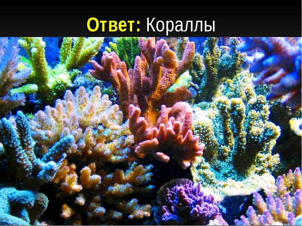 Ответ: Кораллы