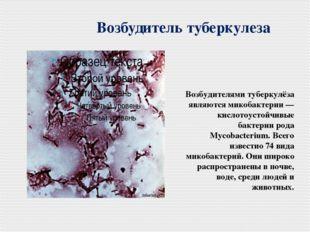Возбудитель туберкулеза Возбудителями туберкулёза являются микобактерии — кис