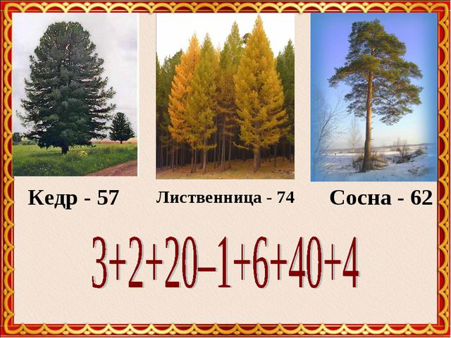 Кедр - 57 Лиственница - 74 Сосна - 62