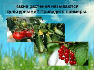 Какие растения называются культурными? Приведите примеры.