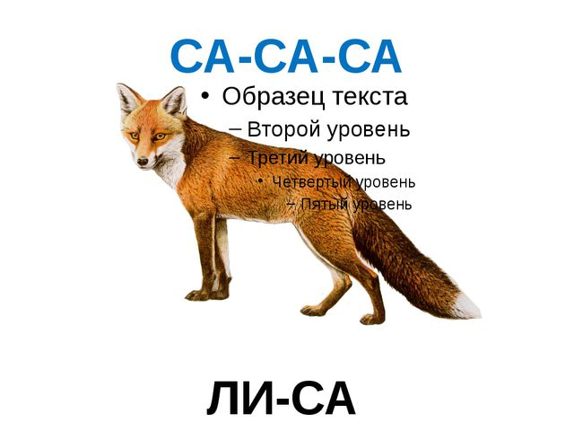 СА-СА-СА ЛИ-СА