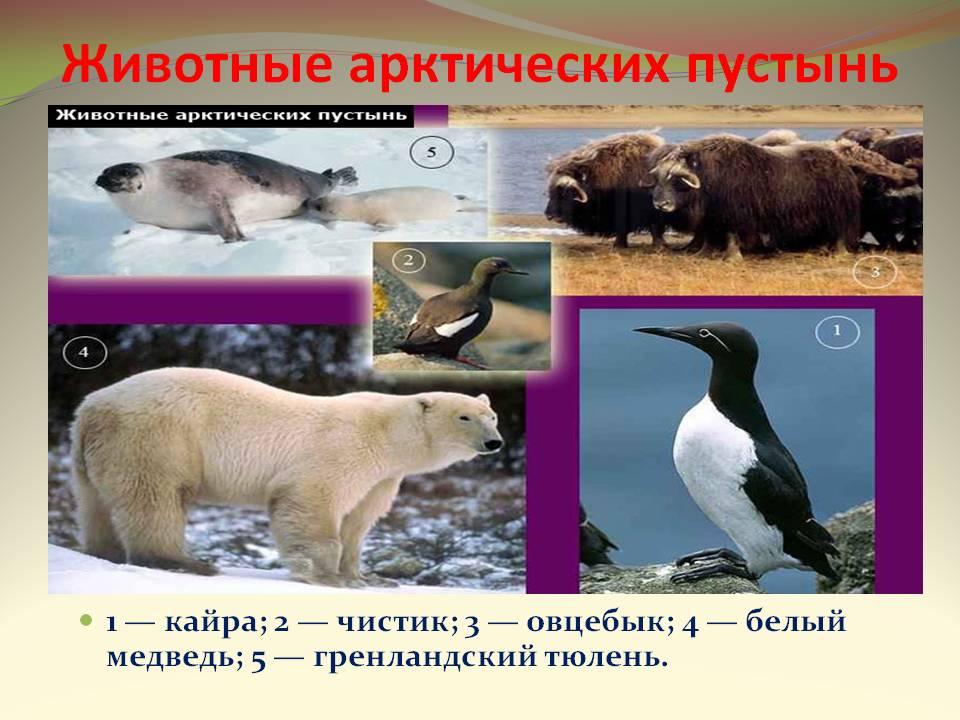 C:\Users\Uzer\Desktop\0008-008-ZHivotnye-arkticheskikh-pustyn.jpg